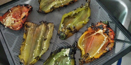 Roasted, organic chilies from the farmers' market, heading into the dehydrator!
