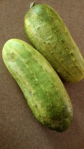 Fresh, sweet cucumbers from the farmer's market